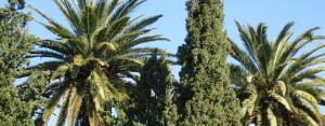 Palmiers et cyprès