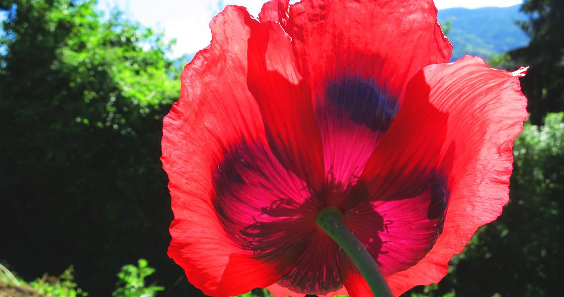 fleurrecadre